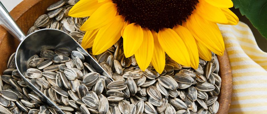 بهترین راه برای بهره بردن از خاصیت های موجود در تخمه آفتابگردان