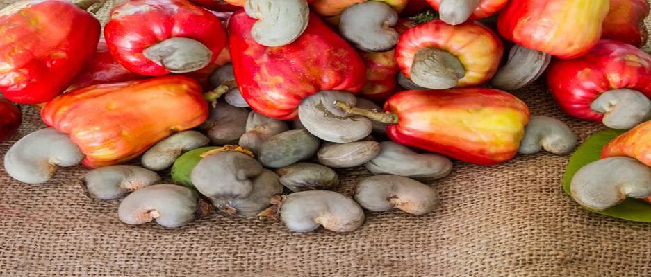 بادام هندی محصول کدام کشور است